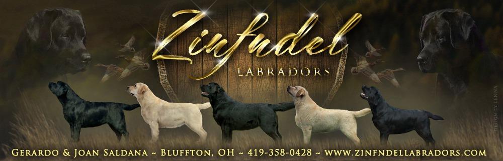 Zinfndel Labradors Ohio Lab Breeders Labrador Retrievers